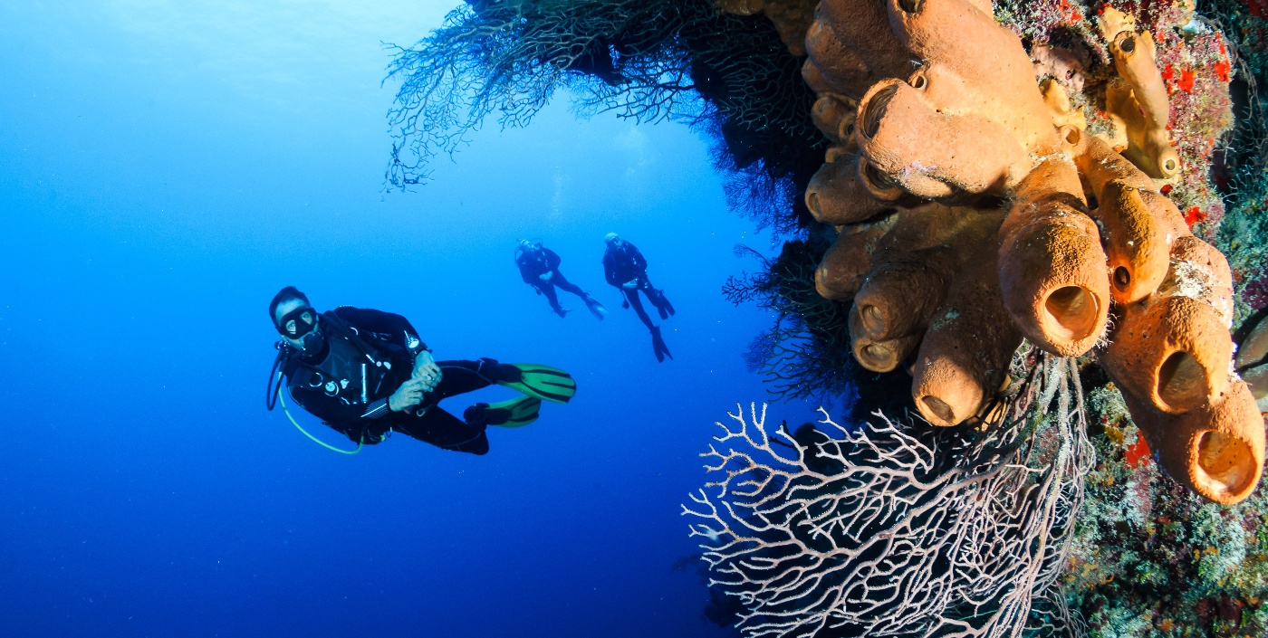 A Group Of SCUBA Divers On A Vertical Coral Wall