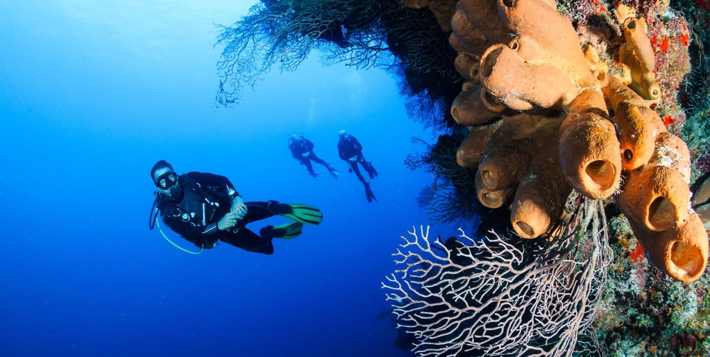 Diving Awareness: An Untaught Skill