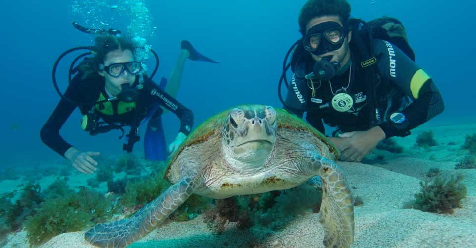 Scuba Divers With Turtle