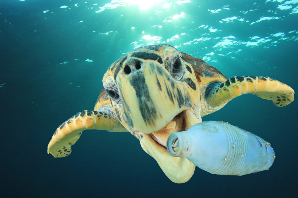 6 Ways Divers Can Reduce Plastic Pollution In Our Oceans